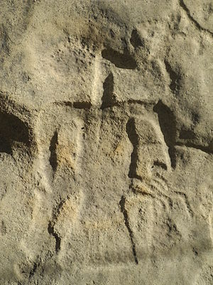 Piasa - An eagle petroglyph at Washington State Park in Missouri