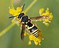 Wasp August 2007-3.jpg
