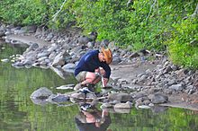 Water quality - Wikipedia