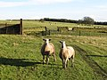 "What's he mean, ""mint sauce""^ - geograph.org.uk - 633569.jpg"