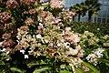 White flower in Botanical garden Liberec, Liberec District.jpg