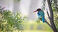 White throated kingfisher at IIT Delhi.jpg