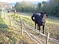 Wiese in Sevenig (Our) - geo.hlipp.de - 6821.jpg