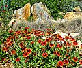 Wildflowers and Stone 3-21-15a (16721073759).jpg