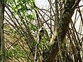 Wildlife's @ Wayanad wildlife Sanctuary - panoramio (2).jpg