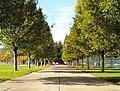 Wilsonville Memorial Park walkway.jpg