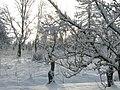 Winter morning in Lēdmane - panoramio - Paul Berzinn.jpg