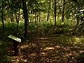Woliński Park Narodowy ścieżka przyrodnicza Paprocie 2016-08-27 p.jpg