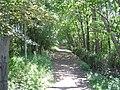 Woodland Track - off Potternewton Lane - geograph.org.uk - 1331781.jpg