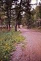 Wyoming - Absaroka Mountain Lodge - Jessica - June 1975 (8049508071).jpg