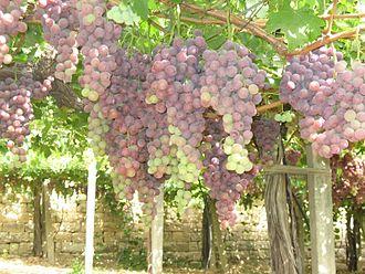 Zahlé - Zahle grapes