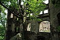 Zamek Świny 11.jpg