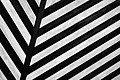 Zebra texture background (Unsplash).jpg