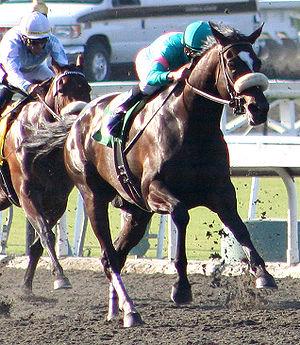 English: Undefeated racehorse Zenyatta winning...