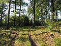 Zielona Góra, Szlak Kaszubski (Trail Kashubian) - panoramio.jpg