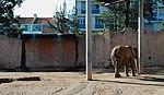 Zoo de Lisboa by Juntas 51.jpg