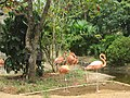 Zoologico de Cali (15149400556).jpg