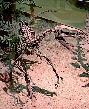 Coelurosauria - Reconstructed coelurosaur skeleton, Wyoming Dinosaur Center