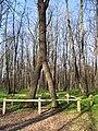 """""""Большой Лес"""" - Ботанический памятник природы местного значения.JPG"""