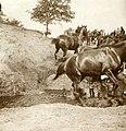 (NL c.1900) Exercise Horse Artillery Corps, Pict. AKL092028.jpg