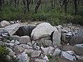 Étangs de La Jonquera - Dolmen Estanys II - 3.jpg