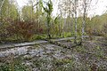 """Ökologische Vorrangsfläche """"Baumkirchen Mitte"""" 17.jpg"""