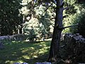 Židovský hřbitov - Hoštice u Volyně.jpg