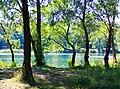 Деревья на берегу Вербного озера.jpg