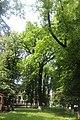 Дуб черешчатий перед аграрним коледжем 02.jpg