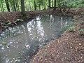 Заросший пруд на территории усадьбы Никулино(Даниловское).jpg