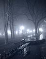 Зимовий туман у Міському саду.jpg