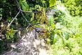Квітнуть дерева 06.jpg