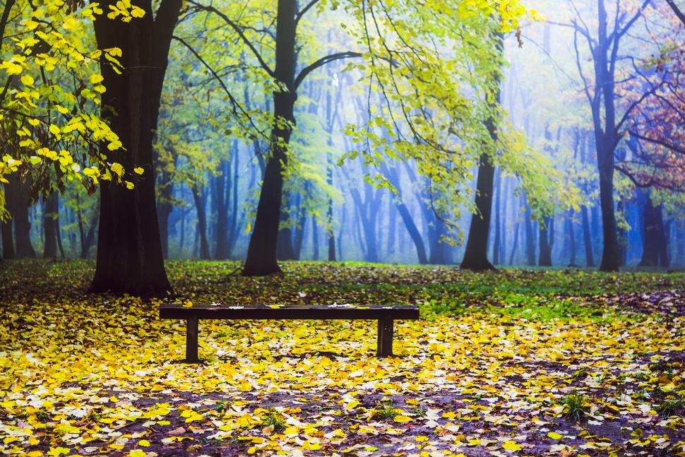 Коšutnjak, jesen, posle kiše