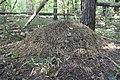Кошеляевское болото - 1.jpg