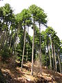 Национален парк Пелистер 2014 (23).JPG