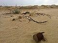 Олешківські піски 2014.jpg