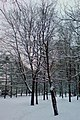 Парк им. Федорова - panoramio.jpg