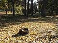 Парк у Матарушкој Бањи 4.JPG