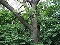 Парк шума Гази Баба во мај (172).JPG