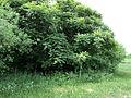 Парк шума Гази Баба во мај (53).JPG