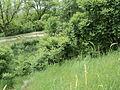 Парк шума Гази Баба во мај (71).JPG