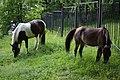 Разномастные лошадки.jpg