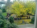 Старо дрво у дворишту Гимназије у Врбасу.jpg