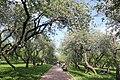 Яблоневый путь.jpg