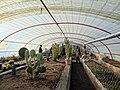 گلخانه کاکتوس دنیای خار در قم. کلکسیون انواع کاکتوس 21.jpg