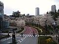 ミッドタウンの桜 - panoramio.jpg