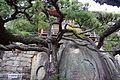 千光寺 Senko-ji - panoramio (1).jpg