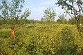 名人公园中的杜鹃 - panoramio.jpg