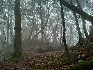 Taiwan subtropical evergreen forests Ecoregion (WWF)