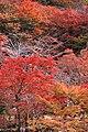 岩屋堂公園 (愛知県瀬戸市岩屋町) - panoramio (20).jpg